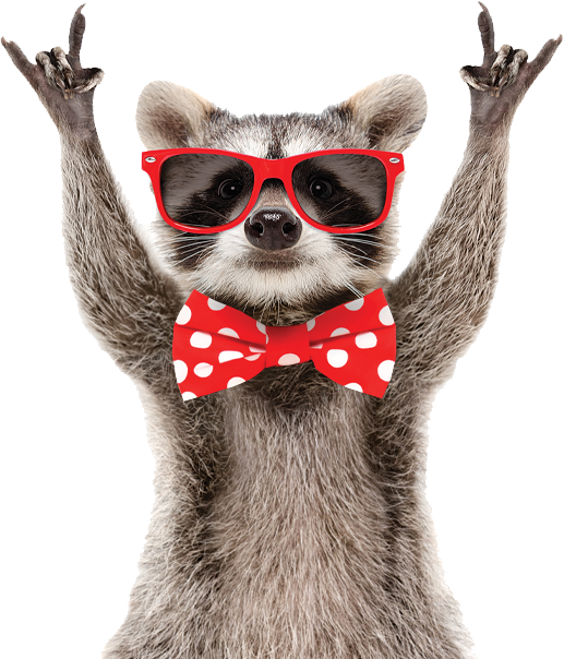 zesty web design racoon